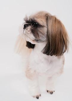 Cão pequeno bonito vista frontal