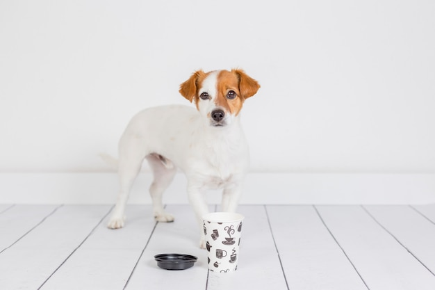 Cão pequeno branco bonito procurando café na caneca. acorde e conceito de manhã. animais de estimação dentro de casa. parede branca