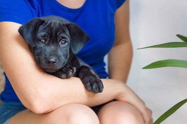 Cão pequeno pensativo triste bonito, cachorrinho preto bonito do abrigo que encontra-se nas mãos, braços da pessoa irreconhecível, mulher, menina em casa ,. pessoas e seus animais de estimação. amor, conceito de cuidados animais