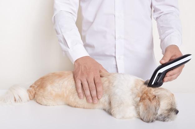 Cão pequinês no salão de veterinário