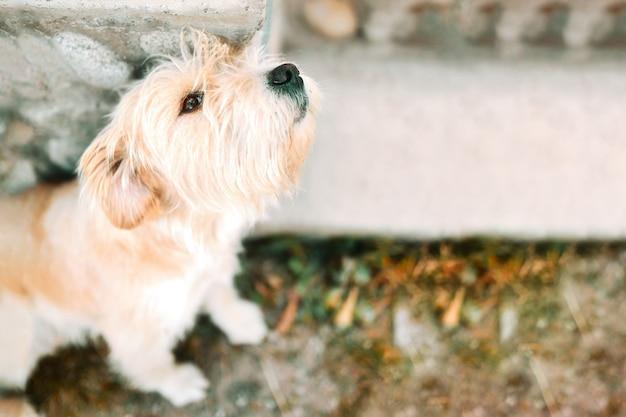 Cão perdido sozinho triste