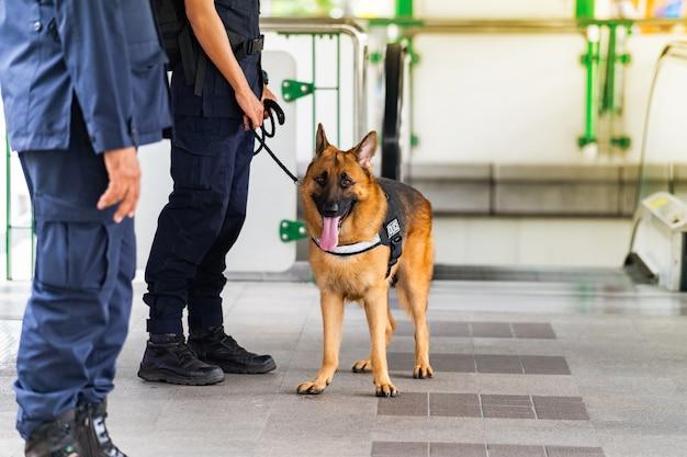 Cão policial em pé na estação de trem