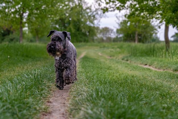 Cão preto correndo pela trilha