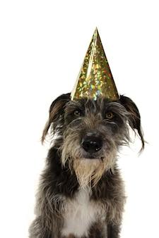 Cão preto engraçado que comemora um aniversário ou ano novo com um chapéu de partido dourado.