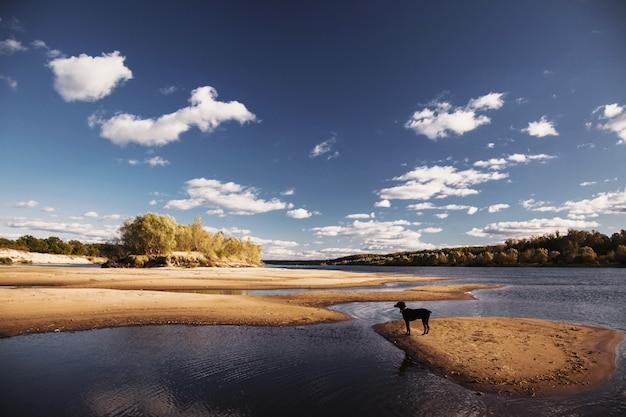 Cão preto na natureza. paisagem de verão linda. o céu azul claro brilhante com nuvens brancas. areia amarela na praia. superfície da água. o rio na planície. folhagem verde. natureza selvagem.