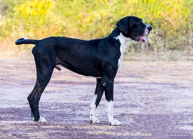 Cão preto no campo.