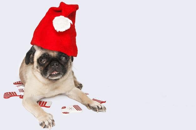 Cão pug com chapéu de papai noel na cabeça