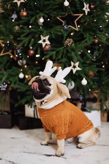 Cão pug fantasiado de natal