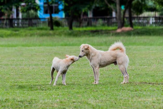 Cão que corre ao redor em um gramado verde.