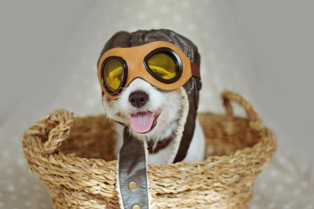 Cão que desgasta os óculos de guia do chapéu piloto dentro de uma cesta de vime de encontro ao fundo cinzento.