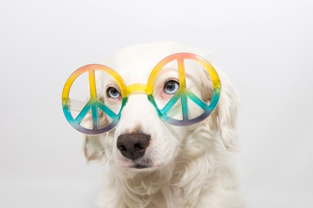 Cão que desgasta os óculos de sol do hippie. isolado
