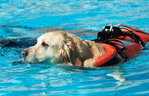 Cão salva-vidas