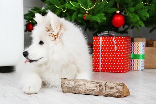 Cão samoieda brincalhão com lenha e árvore de natal