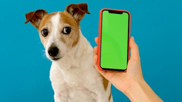 Cão senta-se ao lado de uma tela verde de smartphone