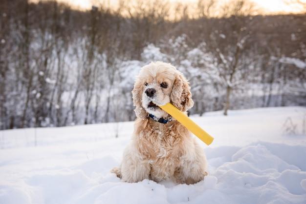 Cão senta-se em um monte de neve com pau na boca