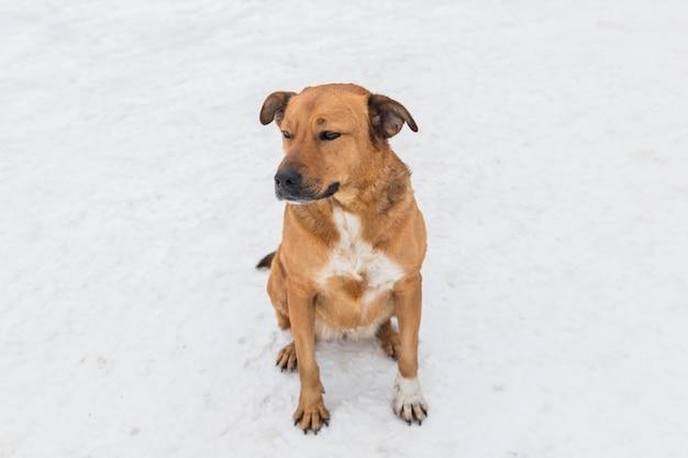 Cão sentado na terra branca de neve