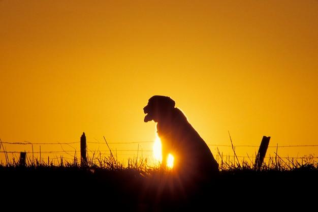 Cão sentado no campo ao pôr do sol