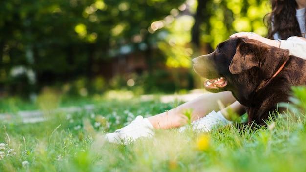 Cão sentado perto da perna da mulher no parque