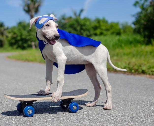 Cão skate street mammal traje canino