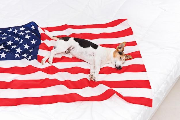Cão sonolento bonito situa-se nos eua estados unidos da bandeira americana