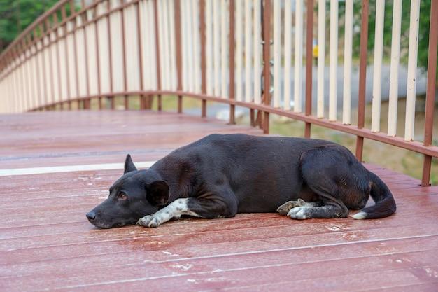 Cão tailandês preto dorme na ponte de madeira na tailândia