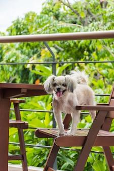 Cão tão bonito raça misturada sentado na cadeira