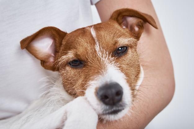Cão triste deitado nas mãos do proprietário, olhando para a câmera. cachorro doente