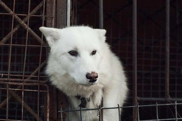 Cão triste na gaiola