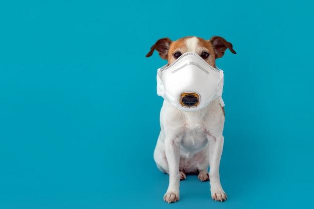 Cão usando uma máscara médica para se proteger de infecções