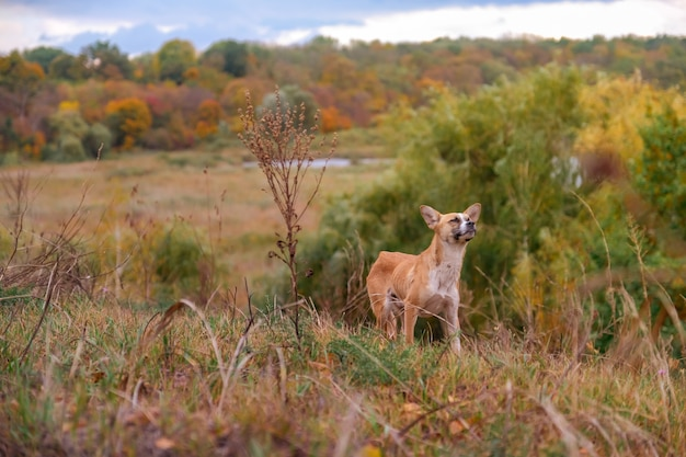 Cão vadio, magro e com fome, fareja o ar e procura comida na floresta