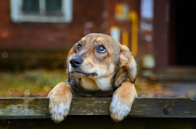 Cão vadio marrom pequeno na rua