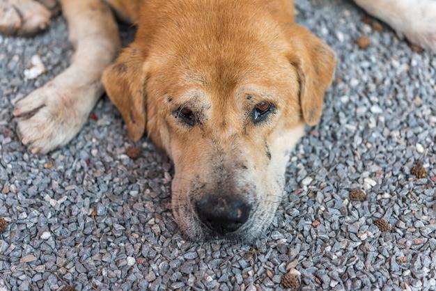 Cão vadio marrom tailandês dormindo com solitário e falta