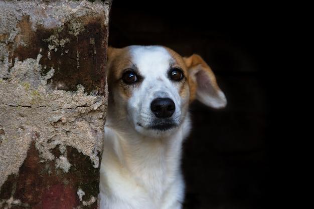 Cão vadio retrato mestiço em fundo escuro