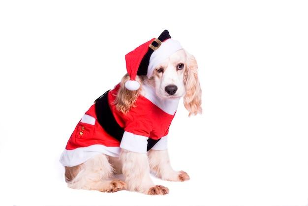 Cão vestido de papai noel