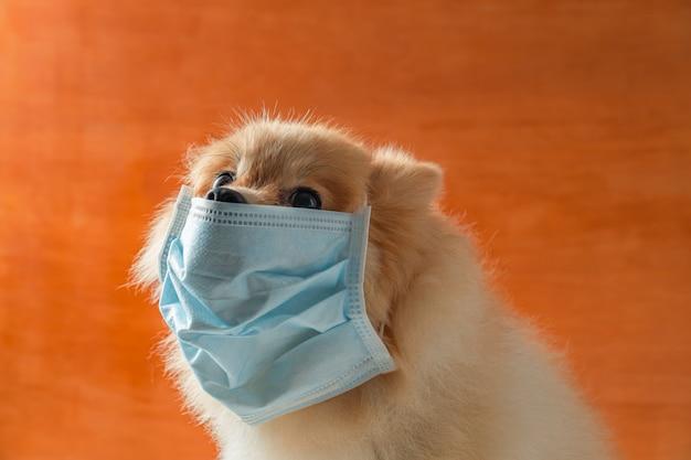 Cão vestindo máscara de poluição do ar para proteger a poeira pm2.