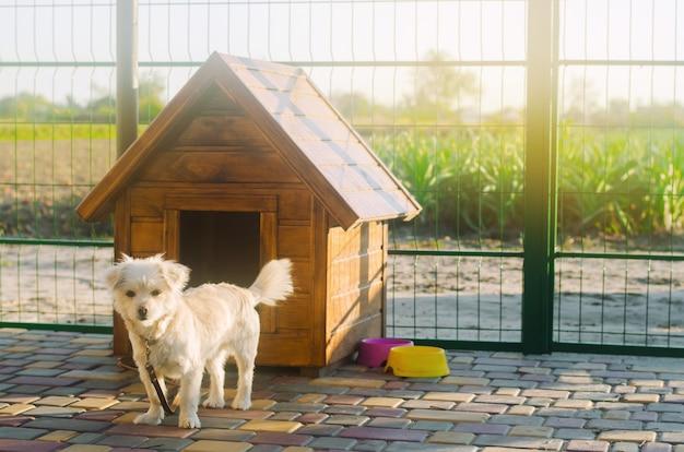 Cão vira-lata branco lindo perto do estande em um dia ensolarado