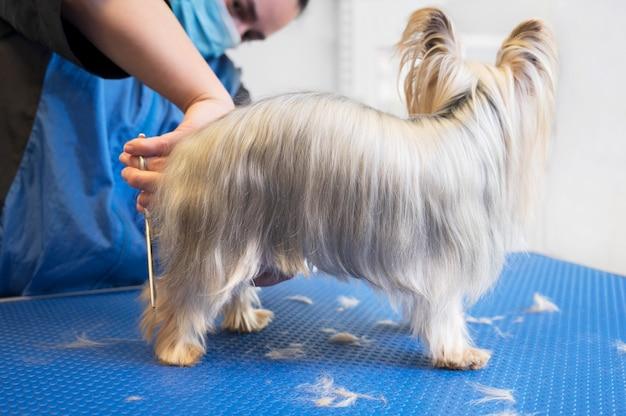Cão yorkshire terrier sendo preparado em um estúdio de cuidados para animais de estimação