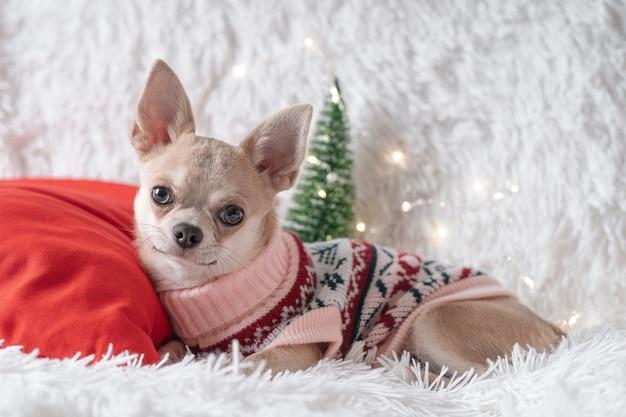 Cãozinho fofo de natal com suéter