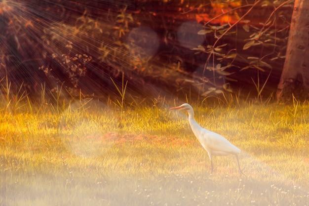Capa de foto pouco clara com nevoeiro e campos agrícolas de inundação de raios solares durante o pôr do sol. primavera de conto de fadas ou campo de agricultura de fantasia de verão. o pássaro branco vira o rosto para a luz do sol. ideia do conceito de esperança