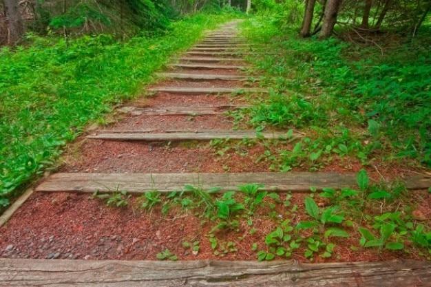 Cape breton floresta trilha hdr