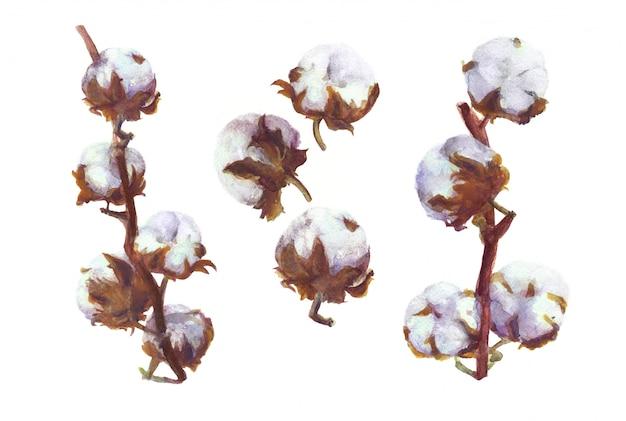 Cápsulas de algodão pintura em aquarela. conjunto botânico desenhado à mão