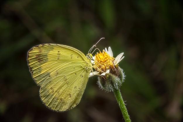 Captura da borboleta em flores amarelas no parque do jardim.