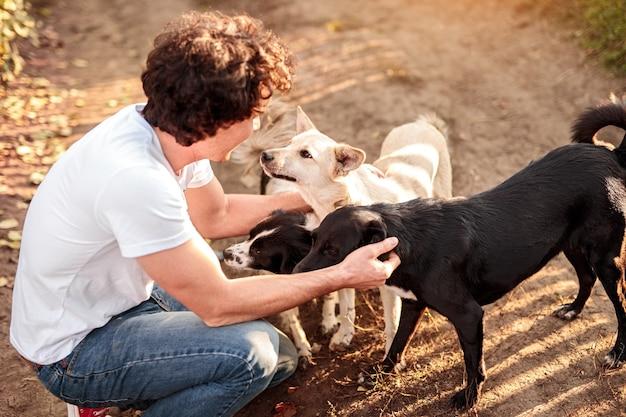 Cara alegre sentada nas ancas e acariciando cães vira-latas leais em um dia ensolarado no campo