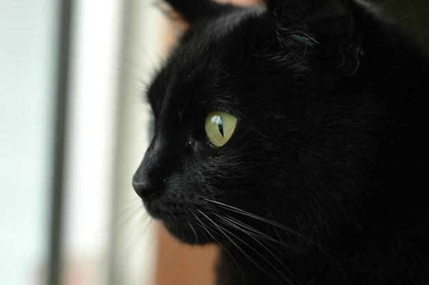 Cara de gato preto estrelando fora