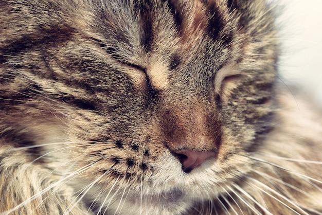 Cara dormindo gato