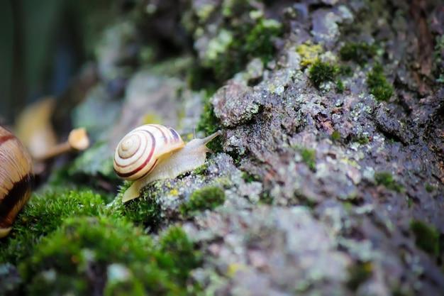 Caracóis em condições naturais. foco seletivo. natureza.