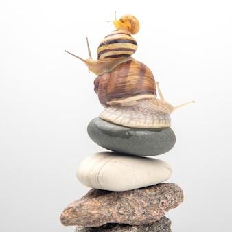Caracóis um em cima do outro se equilibram no topo de uma pirâmide de pedra. delicadeza de carne e comida gourmet.