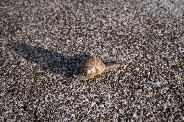 Caracol comum em concha rastejando na superfície de pedra de granito