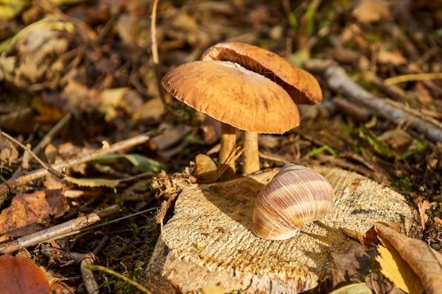 Caracol em um toco com cogumelos