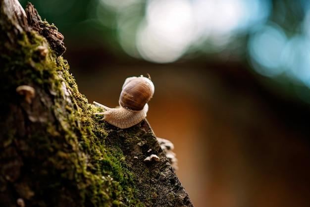 Caracol em uma árvore em musgo na chuva.